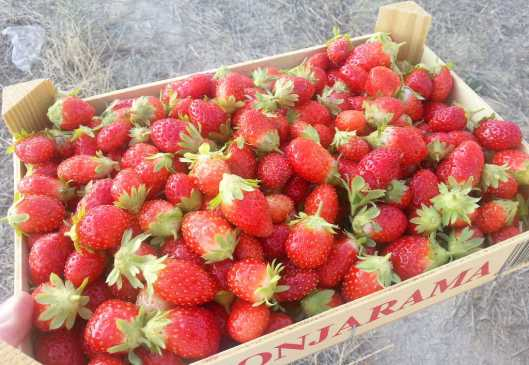 Caja de fresas Monjarama